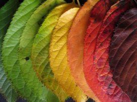 Geef kleur aan de verandering