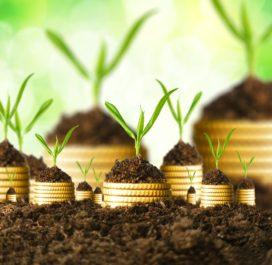 Hoe grote groeiers investeren