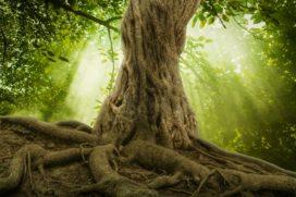 Onder de grootste boom groeit niets