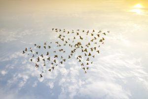 Rob-Jan De Jong: 'Iedere leider kan visionair vermogen ontwikkelen'