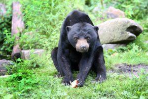 Burgers' Zoo heeft ecosystemen (foto Burgers's Zoo)