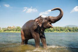 Organisaties als dansende olifanten