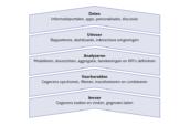 Het vijflagenmodel voor business intelligence